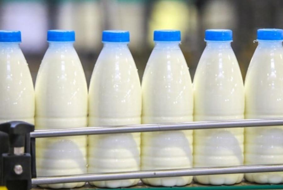 Россельхознадзор о запрете на посадку картошки и ввоза молока из Белоруссии